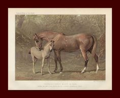 THOROUGHBRED Mare & Foal, HORSE, Fine CASSELL Chromolithograph,  antique 1890