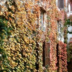 Winter arriving soon also in Rome! #autumn #autumnleaves #rome #roma #courtyards #leaves