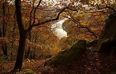 Einen weiten Blick, ... hat man vom Vogelfelsen ins Saartal und über Saarhölzbach. Besonders jetzt im Herbst, wenn viel weniger Blätter an der Bäumen sind. :-)