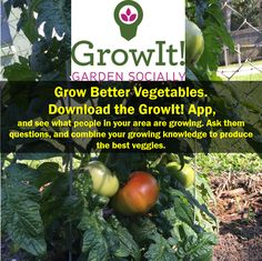 Use the Free GrowIt! App to become a better vegetable grower. Whether you grow your veggies in a garden or on a windowsill, you can tap into the community and knowledge around you to find out the best tips and practices to grow the healthiest, best tasting vegetables.