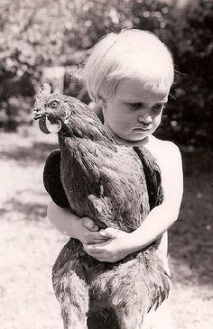 This is adorable! When my mother was a child she played with chickens 🐓as if they were baby dolls. Chickens And Roosters, Pet Chickens, Raising Chickens, Chickens Backyard, Vintage Pictures, Old Pictures, Old Photos, Farm Animals, Cute Animals