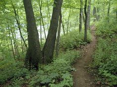 Hiking trail along a wooded area at Petrifying Springs Park. Kenosha County, WI (photo from MarkCz.com)