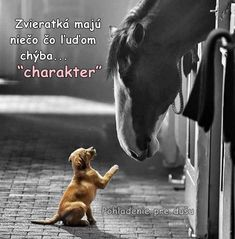 Good Morning Wishes, Good Morning Quotes, Meaning Of Love, True Words, Animals And Pets, True Love, Horses, Pictures, Heart