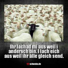 #schwarzes #schaf #alle #ihr #ich #einzigartig #schwäbisch #schwaben #schwoba #württemberg