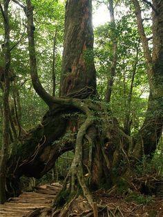 A tunnel through the tree forest...Aku Shima Island