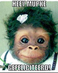 avas first birthday Happy Birthday Funny, Happy Birthday Quotes, Happy Birthday Wishes, Monkey With Makeup, Birthday Pictures, Birthday Images, Monkey Memes, Funny Blogs, Cute Monkey