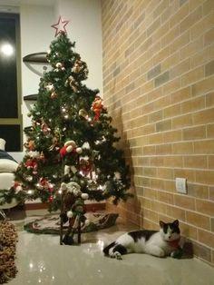 #chrismas #cats