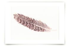 Hawk Feather by Prittybird at minted.com