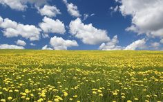 Wallpaper Flowers Nature Field Background Web - Your HD Wallpaper #ID52376 (shared via SlingPic)