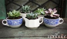 Sweet Succulents - The Junkery