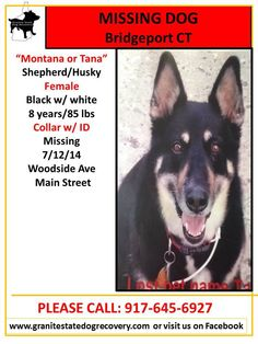 "Granite State Dog Recovery Missing Female Shepherd/Husky Bridgeport CT 7/12/14 ""Montana or Tana"" is 8 years/85 lbs, Black w/ white. Collar w/ ID. Missing near Woodside Ave & Main Street. Please call owner with any info: 917-645-6927  Like"