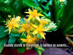 Cuando aturde la trivialidad, la belleza se ausenta... http://www.marcelozamora.com/escritos/el-secreto-de-la-rosa.html