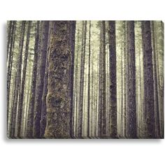 Forest Wall Art ($159) ❤ liked on Polyvore featuring home, home decor, wall art, photo wall art, forest home decor ve photography wall art