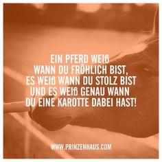 www.prinzenhaus.com EIN PFERD WEIß WANN DU FRÖHLICH BIST, UND ES WEIß GENAU WANN DU EINE KAROTTE DABEI HAST! - #bist #dabei #du #ein #Eine #es #FRÖHLICH #genau #hast #KAROTTE #Pferd #und #WANN #Weiß #wwwprinzenhauscom Equine Quotes, Horse Quotes, Future Festival, Welcome To The Future, Digital Tv, Horse Girl, Nature Reserve, Horse Riding, Beautiful Horses
