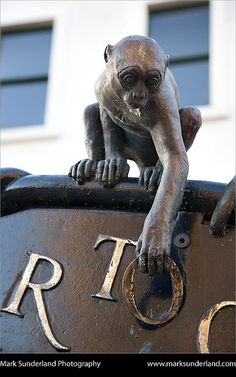 Monkey Sculpture on an Information Sign Dundee Scotland by Mark Sunderland England Ireland, England And Scotland, Sunderland, Dundee, Cairngorms, Statues, Wild Creatures, Monkey Business, Scotland Travel