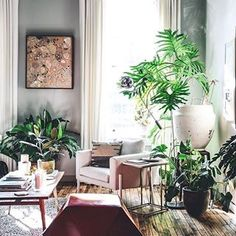 Plant placement on point.  (Image: @hiltoncarter, tagged with #apartmenttherapy)