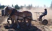 Plough Horses at work