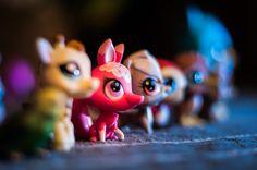 Little pet shop :-)