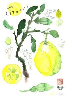 Lemons Original watercolor painting Food art Kitchen decor Fruit Citrus Illustration Botanical french Yellow Lime drawing