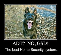 <3 Love the German Shepherd! Loyal, smart, and naturally protective of its entire family to include the young, the old, and the other family pets!