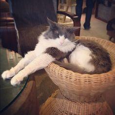 だっちゅーのする猫、多いのね - @makoccchan | Webstagram