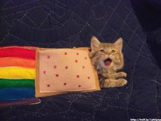 """""""Im fabulous"""" is what this cat is saying in her Nyan cat costume! KitNipBox is celebrating #NationalDressUpYourPetDay by sharing your photos of your furr babies! Like our FB page and use the #KitNipBoxCats hashtag to submit your image! The winner will be featured on all of our social media pages tonight!  #KitNipBox #crazycatlady  #crazycatpeople #catlovers#catlove  #catmom #catdad #catnip #catphoto #meow #purr #kitty #catperson"""