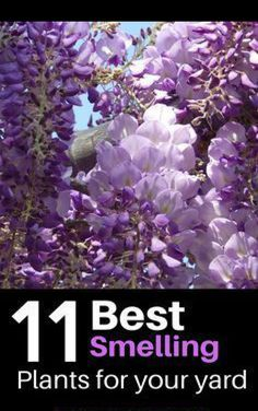 Here are some awesome ideas of plants to add to your back or front yard landscape for some amazing fragrance These plants will look beautiful in your landscaping and include trees shrubs bushes and flowers flowers plants garden gardening home landscape # Cheap Landscaping Ideas, Front Yard Landscaping, Mulch Landscaping, Natural Landscaping, Landscaping Borders, Landscaping Contractors, Florida Landscaping, Pergola Ideas, Backyard Ideas