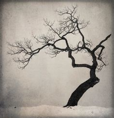 Beautiful Black and White Photos of a Sideways Japanese Tree by Michael Kenna Black And White Landscape, Black And White Drawing, Black White, Tree Tattoo Designs, Tree Designs, Modern Photography, Landscape Photography, Photography Office, Minimalist Photography
