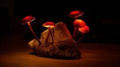 DIY mushroom lights
