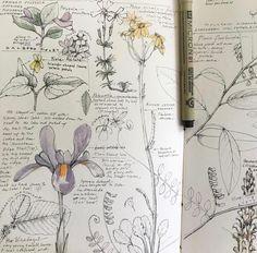 Doodle Inspiration, Sketchbook Inspiration, Journal Inspiration, Journal Ideas, Nature Sketch, Nature Drawing, Botanical Drawings, Botanical Art, Plant Sketches
