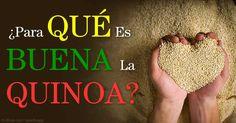 La quínoa no es un grano; es una semilla relacionada con el betabel, acelga y espinaca que contiene grasas, proteínas y antioxidantes saludables. http://articulos.mercola.com/sitios/articulos/archivo/2015/06/14/nutricion-de-la-quinoa.aspx
