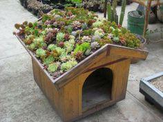 Casa de cachorro com telhado verde.