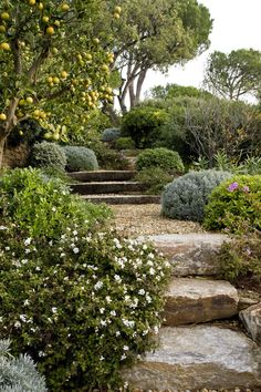 Australian Garden Landscaping Its terrific what these guys did with this specific layout and plan. What a very good approach for a Garden Stairs, Garden Gazebo, Terrace Garden, Garden Trees, Gravel Garden, Hillside Garden, Garden Paths, Pea Gravel, Herb Garden