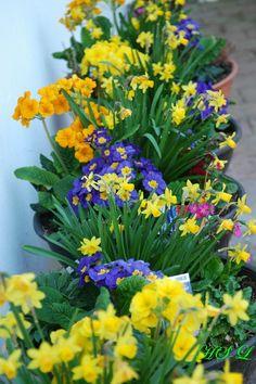 Frühlings Füllhorn