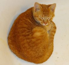 Image result for ginger cats