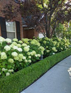 Front House Landscaping, Boxwood Garden, Hydrangea Landscaping, Hydrangea Garden, Outdoor Landscaping, Landscaping Ideas, House Landscape, Garden Landscape Design, Landscape Edging