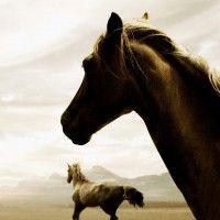 Horses_x1080