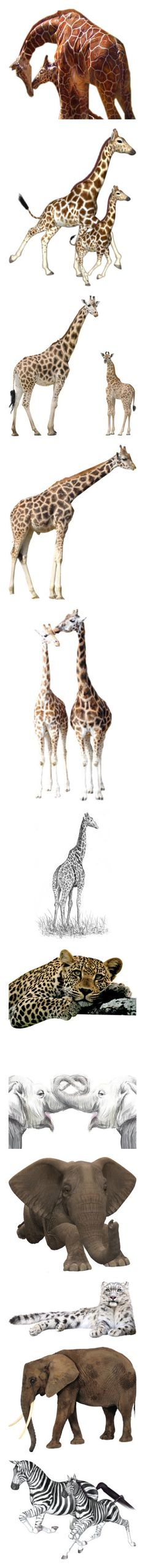 """animals in the wild"" by loves-elephants ❤ liked on Polyvore featuring animals, giraffes, nature, fillers, drawings, backgrounds, giraffe, home, home decor and wall art"