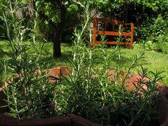 Mutatunk néhány trükköt, amelyekkel egyetlen hajtásról gyorsan gyökeresedő, erős növénykét nevelhetünk. Lépésről lépésre....