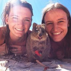 15 Quokka Selfies Too Cute to Ignore - World's largest collection of cat memes and other animals Penguin Animals, Happy Animals, Animals And Pets, Funny Animals, Cute Animals, Cute Creatures, Beautiful Creatures, Animals Beautiful, Animal 2