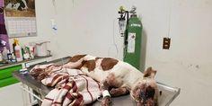Messico: gli lanciano petardi in faccia e lo investono con l'auto. Morte di un cane