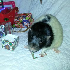Jerrye couldn't wait to open his present.