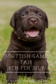 Puppy House Training: Best Practices & Tips - Clay Pigeon Shooting, Puppy House, Best Practice, Two Year Olds, Dog Houses, New Puppy, Country Life, Rescue Dogs, Fun Facts