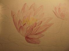 Eicornia Crassipes