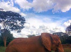 Elephant ❤
