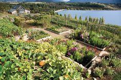 Amazing vege garden! Annabel Langbein.