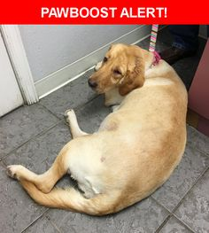 Please spread the word! Fiona was last seen in Grant, FL 32949.  Description: Lost in Cypress Creek in Grant, FL, 4 year old yellow lab/retriever mix.  She is wearing a prism and pink flowered collar. Call 321/698-7789. She is a therapy dog.  Nearest Address: 5699 Cypress Creek Drive, FL, United States