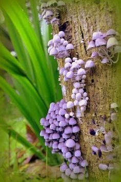 Purple Mushrooms on a    Tree!