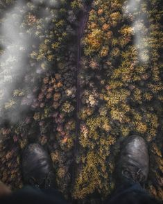 Woods, Creative, Painting, Instagram, Art, Art Background, Woodland Forest, Painting Art, Kunst
