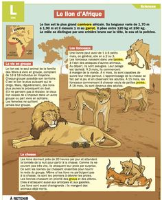 Fiche exposés : Le lion d'Afrique                                                                                                                                                     Plus Cheetah Birthday, French Classroom, French History, Learning Italian, Cat Behavior, Teaching French, Thing 1, Reading Skills, Science For Kids